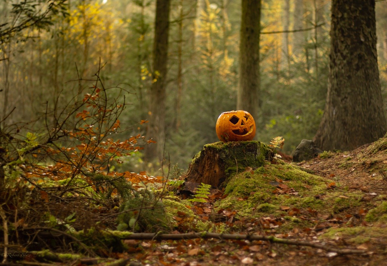 A halloween pumpkin in the middle of a forest
